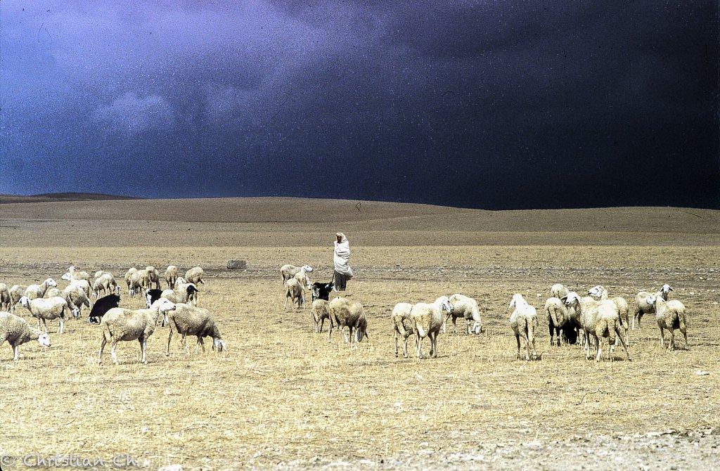 algerie0010.jpg